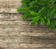 Fir tree branch on wooden background Royalty Free Stock Images