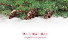Fir tree branches with cones. Royalty Free Stock Photos