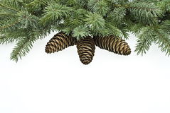 Fir tree branches with cones. Christmas decoration Royalty Free Stock Photography