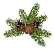 Fir tree branches and cones. Vector illustration. Stock Photo