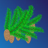 Fir-tree branches and fir cones. On a blue background Royalty Free Stock Images