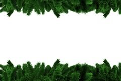 Fir tree branches forming frame. On white background Stock Image