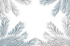 Fir tree branches forming frame. On white background Stock Photography