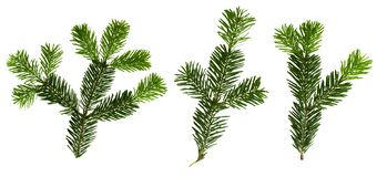 Fir tree branches with isolated on white background. royalty free stock images