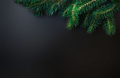 Fir tree Branches over black background with copy space / Christ Royalty Free Stock Photography