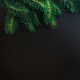 Fir tree Branches over black background with copy space / Christ Royalty Free Stock Photo