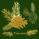Fir tree branches with pine cone in golden color. Vector illustrations Royalty Free Stock Photography