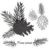 Fir tree branches with pine cone on white background. Fir tree branches with pine cone Black silhouette on white background. Vector illustrations Royalty Free Stock Images