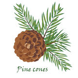 Fir tree branches with pine cone on white background. Fir tree branches with pine cone  on white background. Vector illustrations Stock Images
