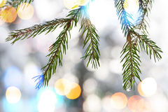 Fir tree branches with snow and colorful lights Royalty Free Stock Photos