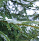 Fir-tree branches with snow in winter park. Fir-tree green branches with snow in the park Royalty Free Stock Photography