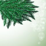 Fir tree branches and snowflakes on colorful background. Christmas vector illustration Stock Photos