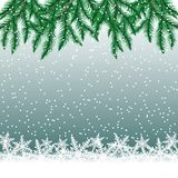 Fir tree branches and snowflakes on colorful background. Royalty Free Stock Photography