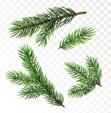Fir tree branches  on white background. Fir tree branches  on transparant background. Christmas vector illustration Stock Images