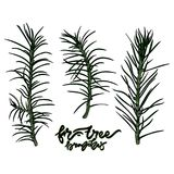 Fir-tree branches vector illustration. Hand drawn lettering - `Fir-tree branches` Vector illustration. Typography design elements for prints, cards, posters Stock Photography