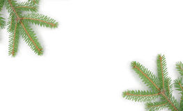 Fir tree - christmas - background Royalty Free Stock Photos