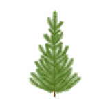 Fir-tree. Christmas fir tree. Isolated, detailed, photo-realistic vector illustration on a white background Royalty Free Stock Photography