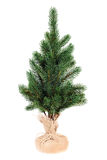 Fir tree for Christmas isolated on white background. Royalty Free Stock Photo