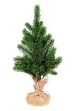 Fir tree for Christmas isolated on white background. Stock Photography