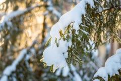 Free Fir Tree Closeup With Snow Royalty Free Stock Photo - 136512225