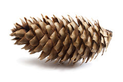 Fir-tree cone Stock Images