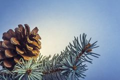 Fir tree cone and twigs Stock Photo