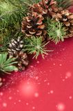 Fir tree cones and branches on a red background. Royalty Free Stock Photography