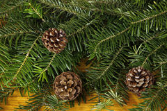 Fir tree with cones. Closeup of fir tree with cones Royalty Free Stock Photo