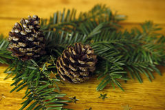 Fir tree with cones and golden stars Royalty Free Stock Images