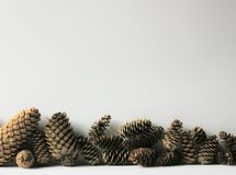 Fir-tree cones and snow. Royalty Free Stock Images