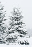Fir tree covered with snow Royalty Free Stock Photo
