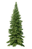Fir tree. Without environment and shadow Stock Images