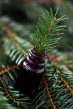 Fir tree essential oil stock image