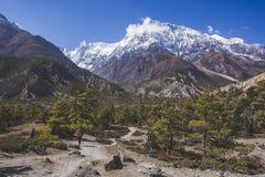 Fir tree forest in Annapurna circuit trek. Himalayas of Nepal. Fir tree forest. Annapurna circuit trek. Himalayan mountains of Nepal stock photos