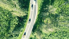 Fir tree forest and European rural car road. Aerial top down view of a fir tree forest and a car road stock footage