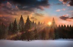 Fir tree forest in snowy landscape. Digitally generated fir tree forest in snowy landscape Stock Photo