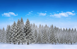 Fir tree forest in snowy landscape. Digitally generated fir tree forest in snowy landscape Royalty Free Stock Image
