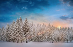 Fir tree forest in snowy landscape. Digitally generated fir tree forest in snowy landscape Royalty Free Stock Images
