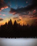 Fir tree forest in snowy landscape. Digitally generated fir tree forest in snowy landscape Stock Image