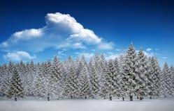 Fir tree forest in snowy landscape Stock Image