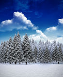 Fir tree forest in snowy landscape Royalty Free Stock Photo