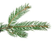 Fir-tree isolated without a shadow. Close-up. Christmas. New Yea Stock Photos