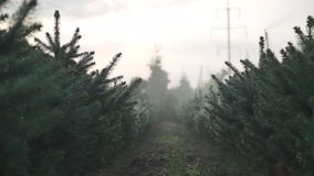 Fir-tree garden during the rain. Fir-tree garden under the rain. Rain drops are at branches. Beauty of nature stock video footage