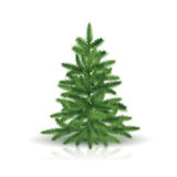 Fir tree with green branches. And reflection on white background Stock Photos