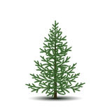 Fir tree with green branches and shadow Royalty Free Stock Photography