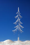 Fir tree from icicle Stock Image