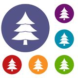 Fir tree icons set. In flat circle reb, blue and green color for web Stock Images