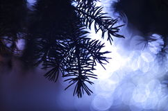 Fir-tree. Indistinct background nature ight lamps fir-tree pine winter new year Royalty Free Stock Images
