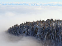 Fir tree island in winter fog. View from the Mont d'or with the swiss alps in the background Stock Photography