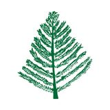 Fir tree isolated . Christmas tree, New Year`s tree. Vector. Happy New year and Merry Christmas time Royalty Free Stock Photo